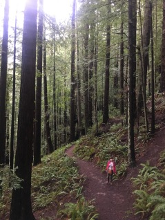 Feeling small in the Redwoods